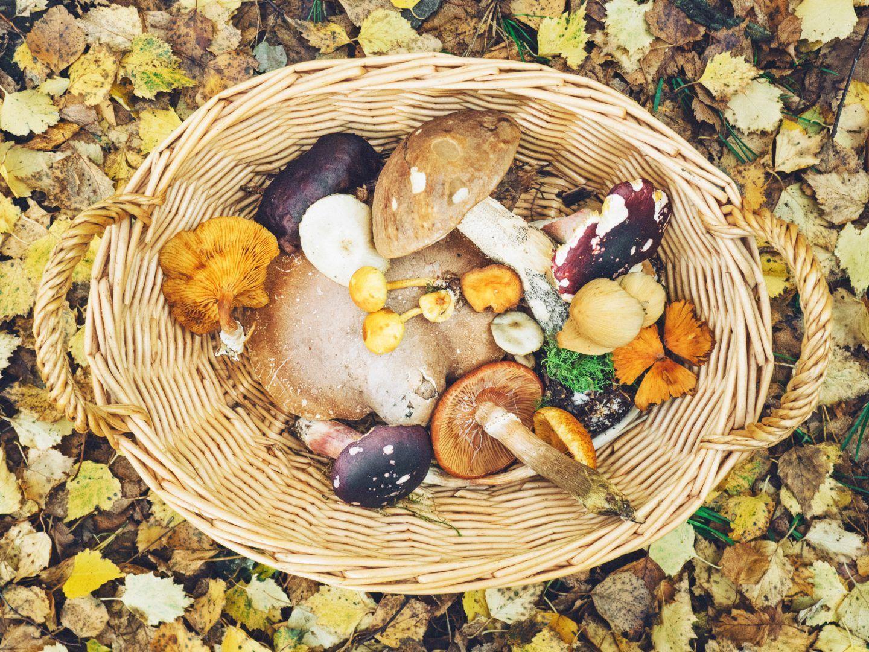 Grzybobranie – kiedy jechać na grzyby i co ze sobą zabrać?