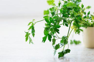 Jak hodować zioła w kuchni?
