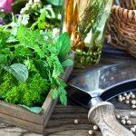 Jak hodować zioła w kuchni - 10 najpopularniejszych ziół doniczkowych