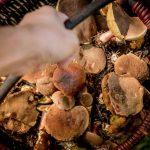 Sposoby na suszenie grzybów. Jak prawidłowo suszyć grzyby w domu?