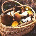 Gdzie jechać na grzyby w Polsce? Najlepsze miejsca na grzybobranie