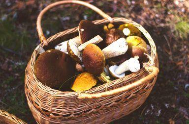 Gdzie jechać na grzyby w Polsce?