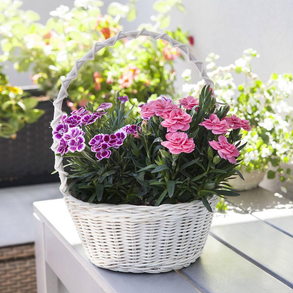 koszyk wiklinowy na kwiaty i zioła flowers