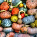 Popularne rodzaje dyni jadalnej i ich zastosowanie w kuchni