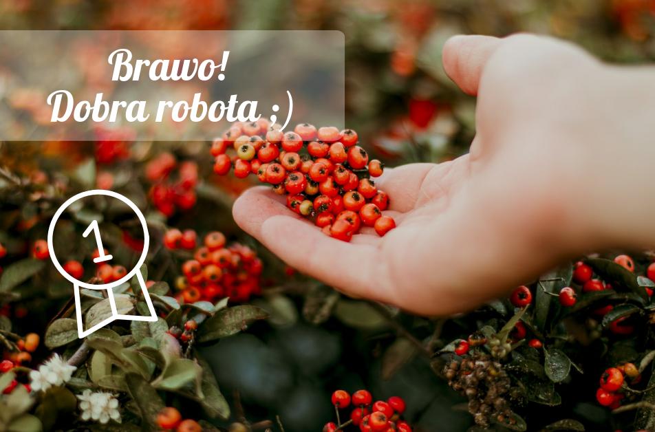 braw dobra robota - Quiz: Czy znasz jesienne krzewy i ich owoce?