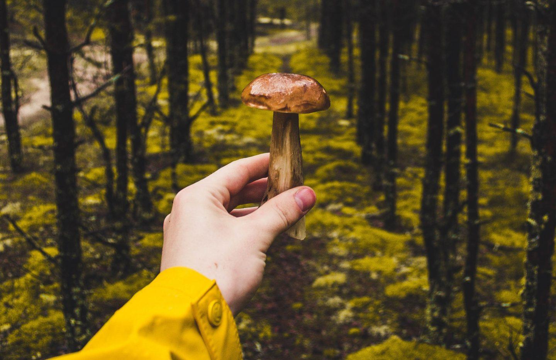 Quiz: Co to za grzyb? Czy rozpoznajesz te grzyby?