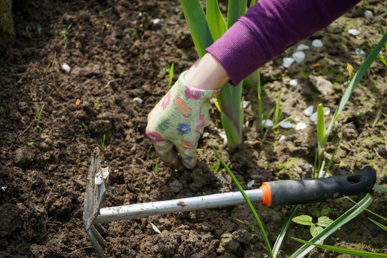 Jak pozbyć się chwastów bez chemii – w ogrodzie i na działce?