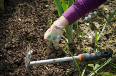 Jak pozbyć się chwastów z ogródka?
