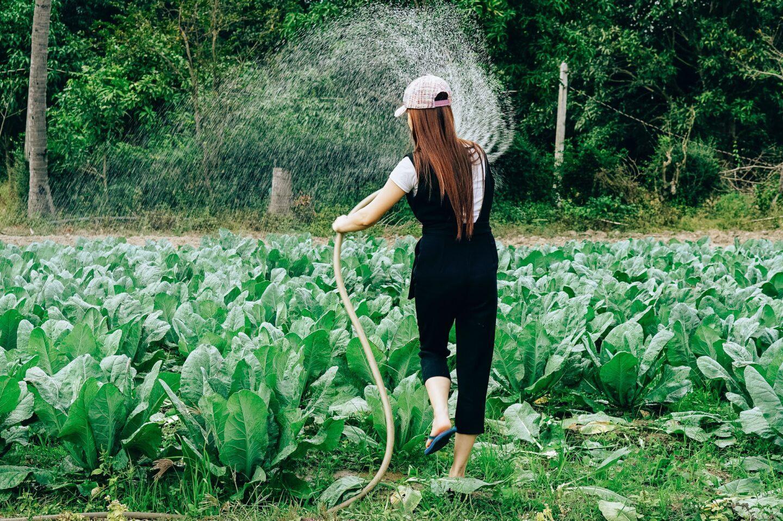 Nawadnianie ogrodu – akcesoria, które musisz mieć