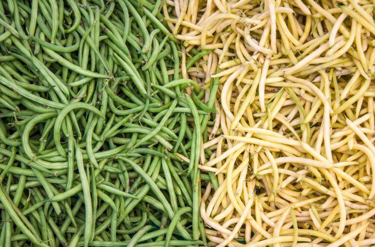 fasolka szparagowa zielona i żółta