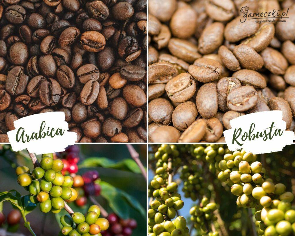 kawa arabika i robusta