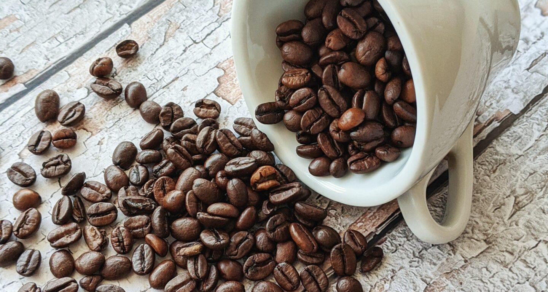 Kawa arabika i robusta – co warto o nich wiedzieć?